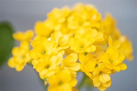 อวดดอกกุหลาบหิน + ถามชื่อต้นไม้ + ปรึกษาวิธีดูแล ==== - Pantip
