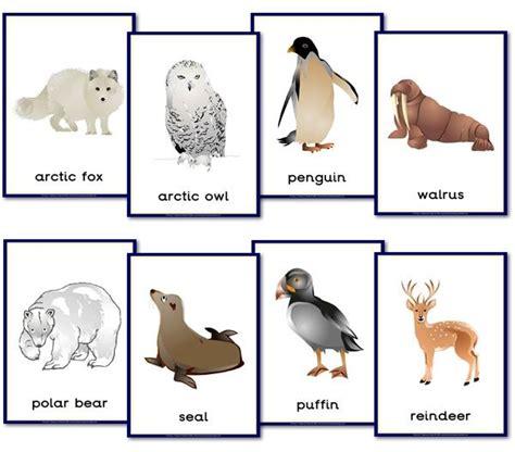 polar animal themed posters polar animals artic animals