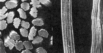 forensic science hair fibres australian police