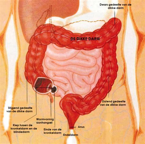 functie van dikke darm