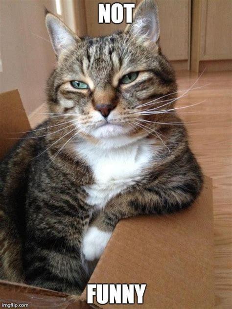 Cat Pic Meme - 20 cat memes you ll totally adore sayingimages com