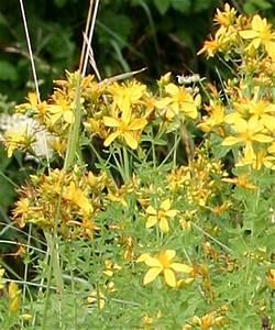 Blumen Am Wegesrand Bestimmen Macht Urlaubsgefhle