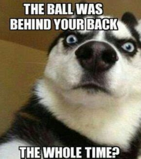 funny dog pictures  captions fallinpets