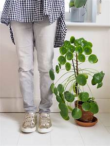 Bouture Plante Verte : bouture entretien et conseils pour votre pilea peperomioide ~ Melissatoandfro.com Idées de Décoration