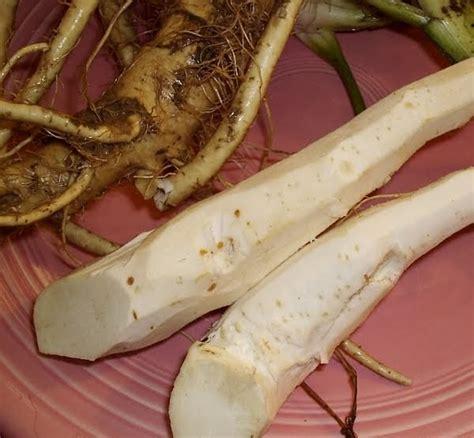 raifort cuisine 18thc cuisine raifort horseradish