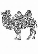 Coloring Mandala Animal Pages Animals Camel Adult Adults Pdf Camels Zentangle Patterns Printable Zoo Mandalas Colour Complex Horse Colouring Coloriage sketch template