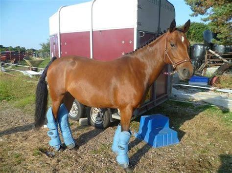 star stables brora scotland tripadvisor