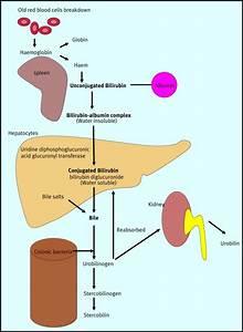 Conjugated Hyperbilirubinaemia