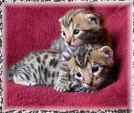 cheap places to get cats fixed cat breeders in oklahoma petsale inc