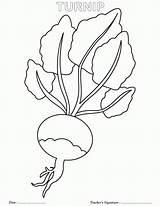 Coloring Turnip Nabo Colorir Vegetal Sheets Desenho Botany Giant Turnips Colouring Outline Goldfinch Eastern Imprimir Tudodesenhos Exploring Preschool Ervilha Printables sketch template