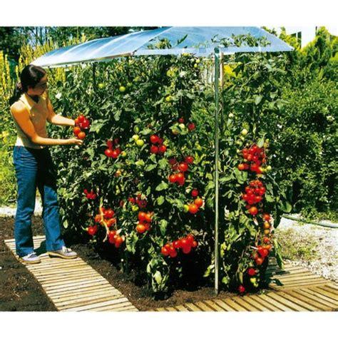 toit de culture pour tomates 2 m 232 tres plantes et jardins