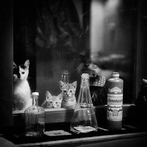 Fenster Aus Ungarn : photographer steffi atze hattingen animals fine art strkng ~ Markanthonyermac.com Haus und Dekorationen