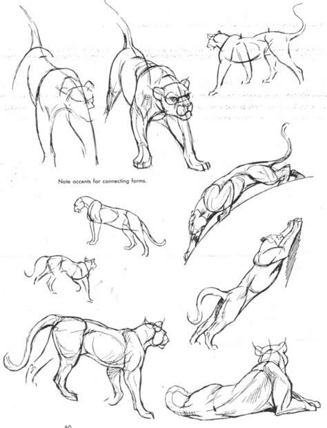 pin  cedric seaut  animals pinterest anatomy lion