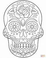 Coloring Skull Sugar Flowers Mandalas Mandala Super Visitar Calaveras Para Colorear sketch template