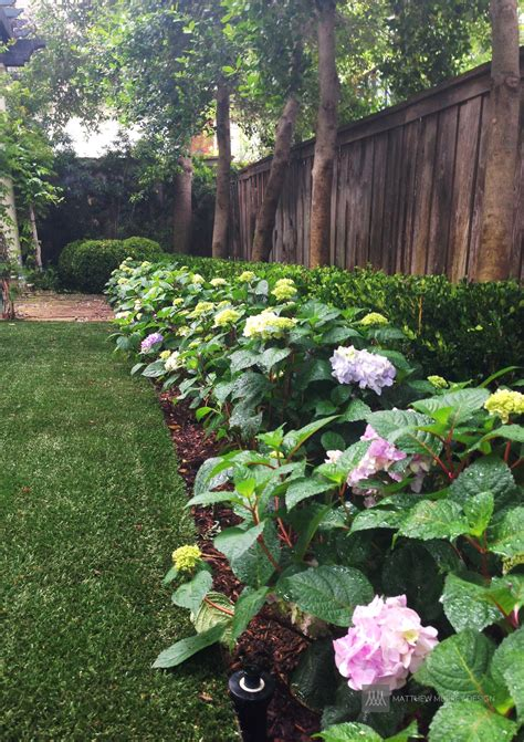 landscape shade plants landscape ideas best solutions for shade