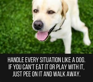 Cute Dog Quotes | Upload Mega Quotes