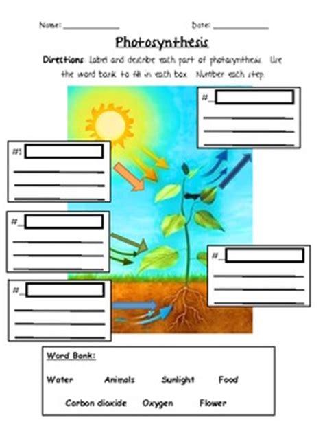 photosynthesis 3rd grade by jennifer caine teachers pay teachers