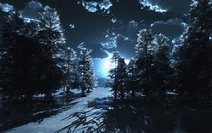 Winter Night Forest | www.pixshark.com - Images Galleries ...