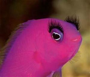 1000 images about PINK FISH on Pinterest