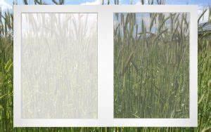 Fliegenschutzgitter Für Fenster : pollenschutz insektenschutz klumpp ~ Eleganceandgraceweddings.com Haus und Dekorationen