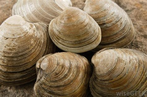 types of clams what are the treatments for an allergic reaction to shellfish