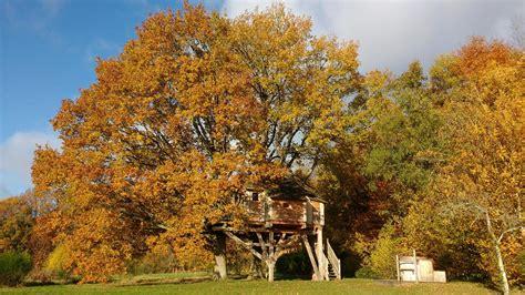 chambre d hotes spa normandie cabane dans les arbres la cabane du perche à st mard de