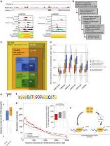 Genome Wide Profiling Regulated Enhancer Rnas
