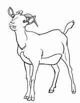 Goat Coloring Pages Printable Coloringcafe Goats Farm Pdf Sheet Adult Animal Sheets Drawing Quilt Button Prints Standard Below Info sketch template