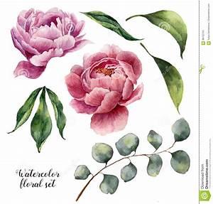 Watercolor Floral Elements Set. Vintage Leaves, Eucalyptus ...