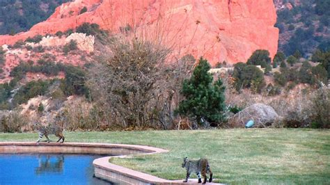 garden of gods resort garden of the gods club and resort hotel deals reviews