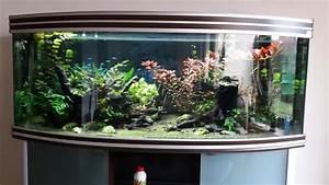 Komplett Aquarium Kaufen : aquarium gebogen kleinanzeigen kaufen verkaufen bei deinetierwelt ~ Eleganceandgraceweddings.com Haus und Dekorationen
