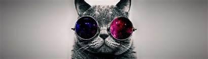 Cat Sunglasses Dual Monitor Wallpapers 4k Animals