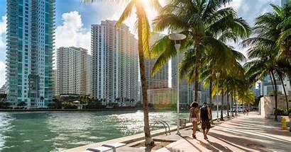 Miami Hedge Palm Beach Downtown Florida Trees