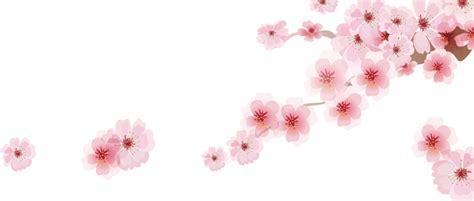 cherry blossom svg  google search   japanese