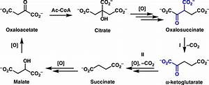 The Image Below Shows The Reactions Of The Citric Acid