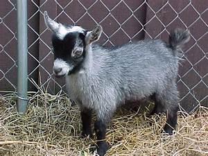 The 10 Bizarre Miniature Animals | oneclickwonders
