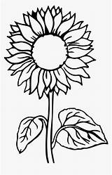 Sunflower Coloring Pages Flower Kindpng sketch template