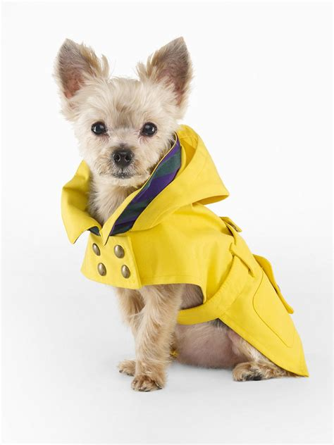 ralph lauren dog raincoat   freaking