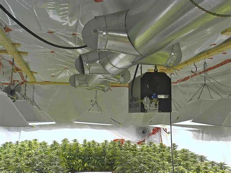 grow room lights how to build the best cannabis grow room growers choice