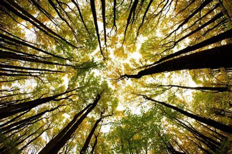 In Der Natur by Natur Klingt Gut