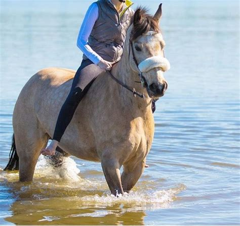 farms horses beach swimming went swim had animals down