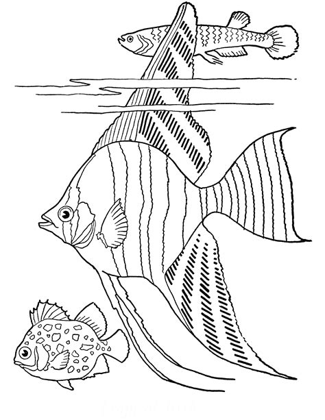 Tropical Fish Coloring Pages by Free Printable Coloring Page Tropical Fish The