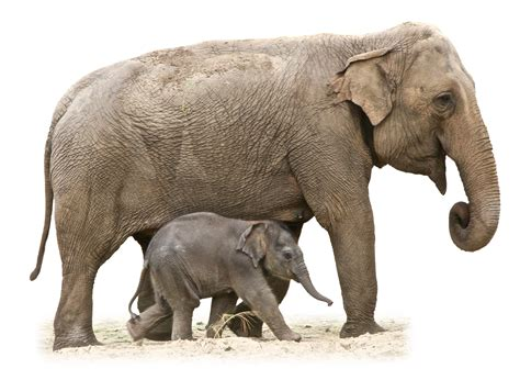 elephant png image purepng  transparent cc png