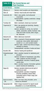 The Cranial Nerves And Their Functions