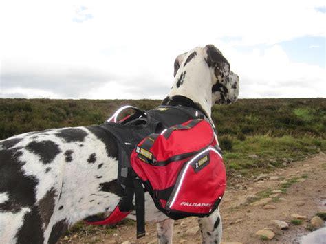 hond met rugzak hondenforum
