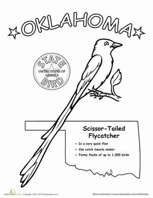 oklahoma state bird worksheet education