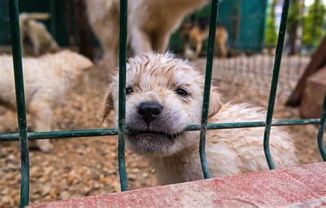 california bill  prohibit pet stores  selling dogs