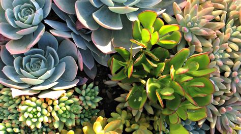 How To Start A Vertical Garden by How To Start A Vertical Garden Business Vertical Garden