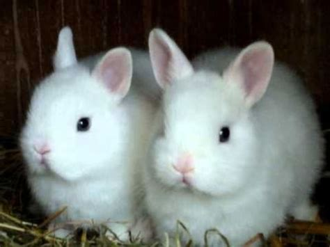 kaninchen babys bunny babys youtube