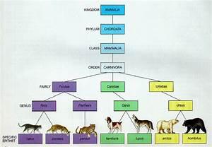 Biology Documents